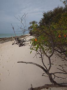 Beach on Heron Island. Heron Island Resort, Australia