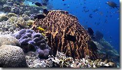 Coral reef at Menjangan Island, Indonesia