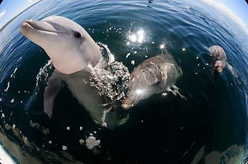 Playful Dolphins at Whyalla, South Australia