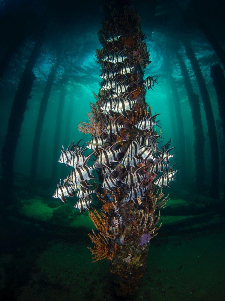 Amanda Blanksby, Guru Grand Winner - Underwater Tour Award Winner 2021