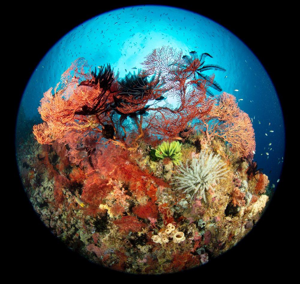 Underwater Scenes - Wayne Osborn. Wakatobi, Sulawesi, Indonesia. Underwater Tour Awards 2021